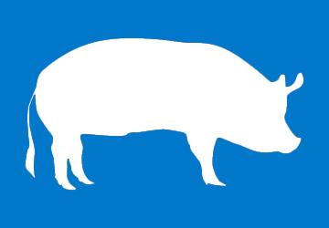 cerdo-2