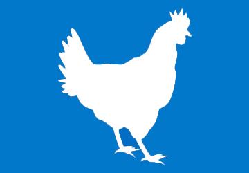 pollo-3