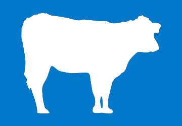 vaca-3